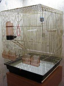 Попугай в клетки видео