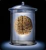 Мозг!