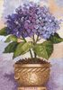 Dimensions Hydrangea in bloom