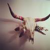череп рогатого животного