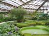сходить дождливой осенью в ботанический сад