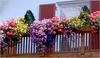 Посадить цветы на балконе
