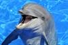 Плавание с дельфином индивидуальное