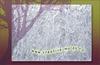 Текструрный лист