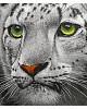 Раскраски по номерам Белый тигр