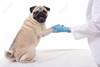 стерилизовать собаку