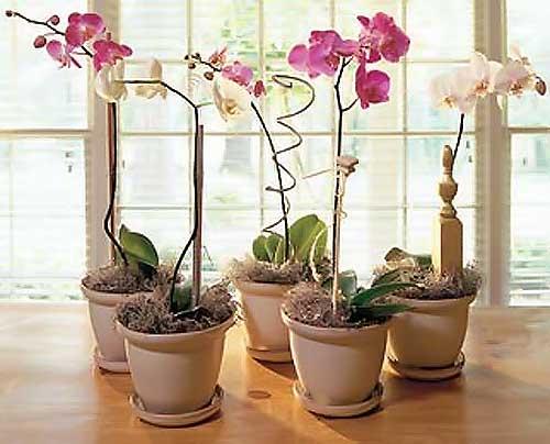 Можно ли сажать орхидею в обычный горшок 34