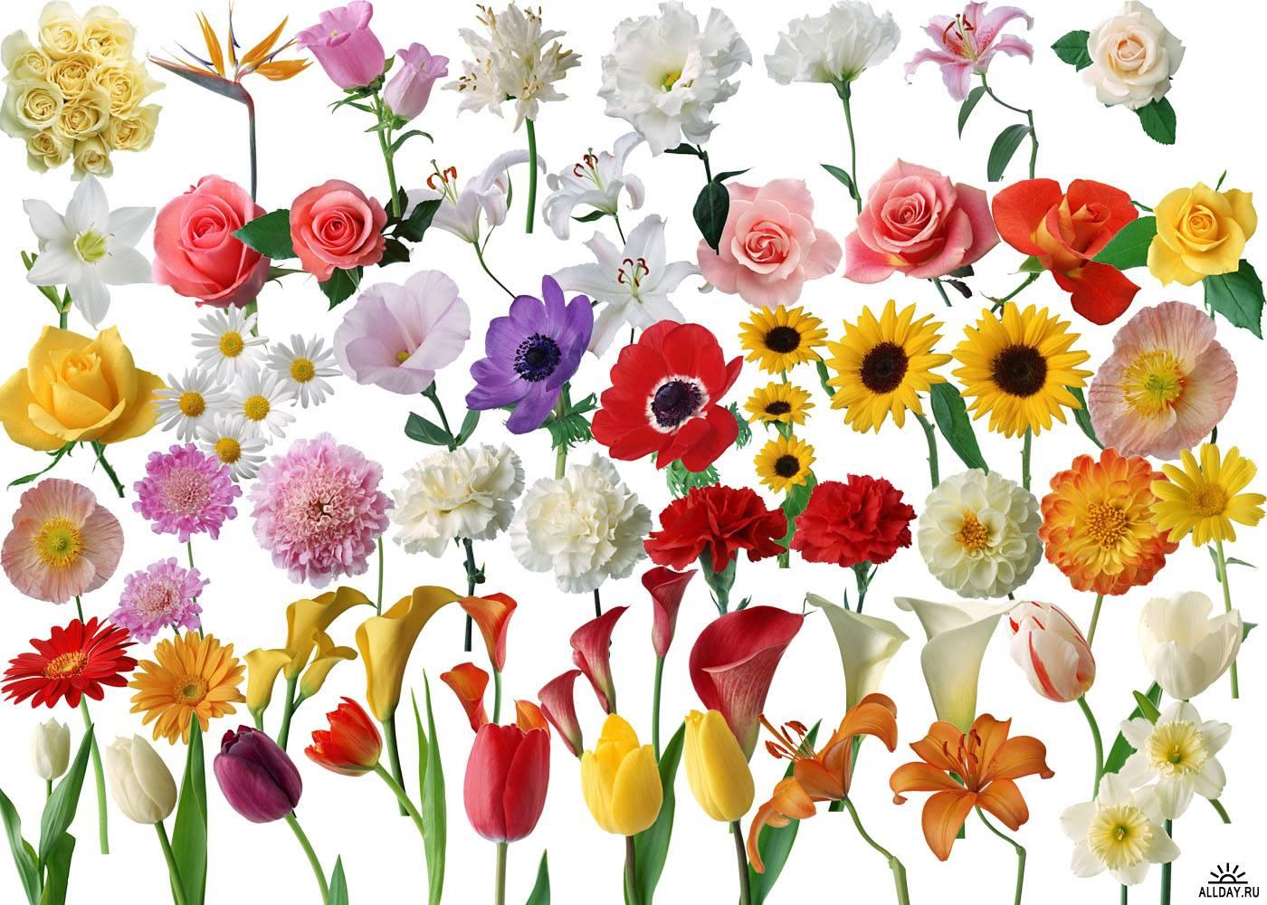 Фото разных цветов нарисованные
