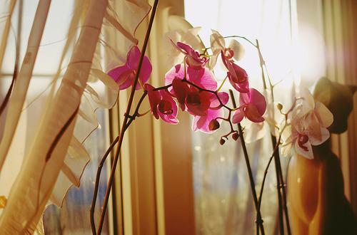 Орхидея девушке в подарок 68