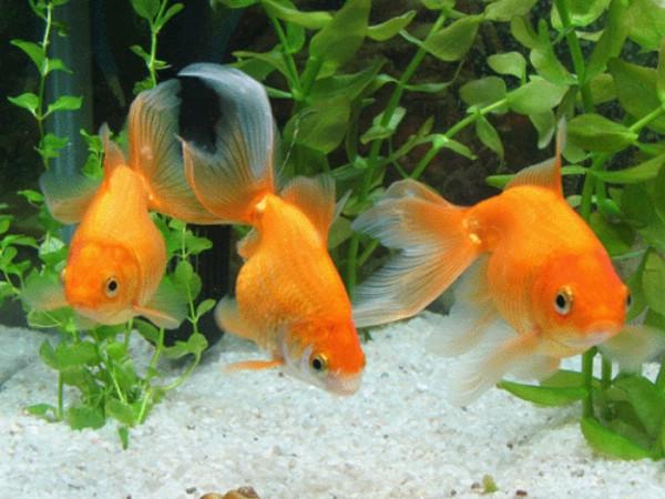 К чему снятся три рыбы