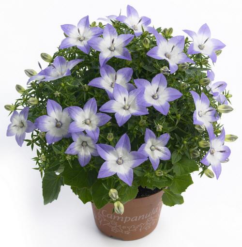 фото домашних цветов