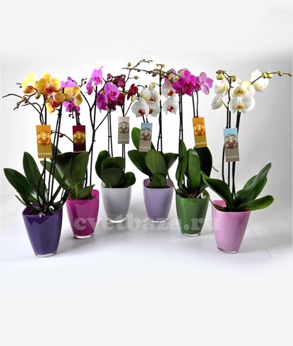Подарочные цветы в горшках фото и названия