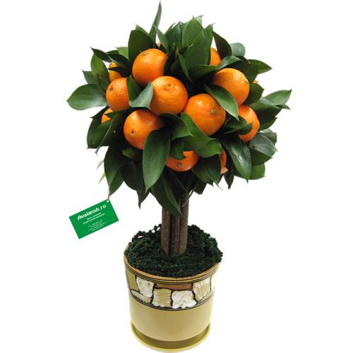 Как сделать своими руками мандариновое дерево