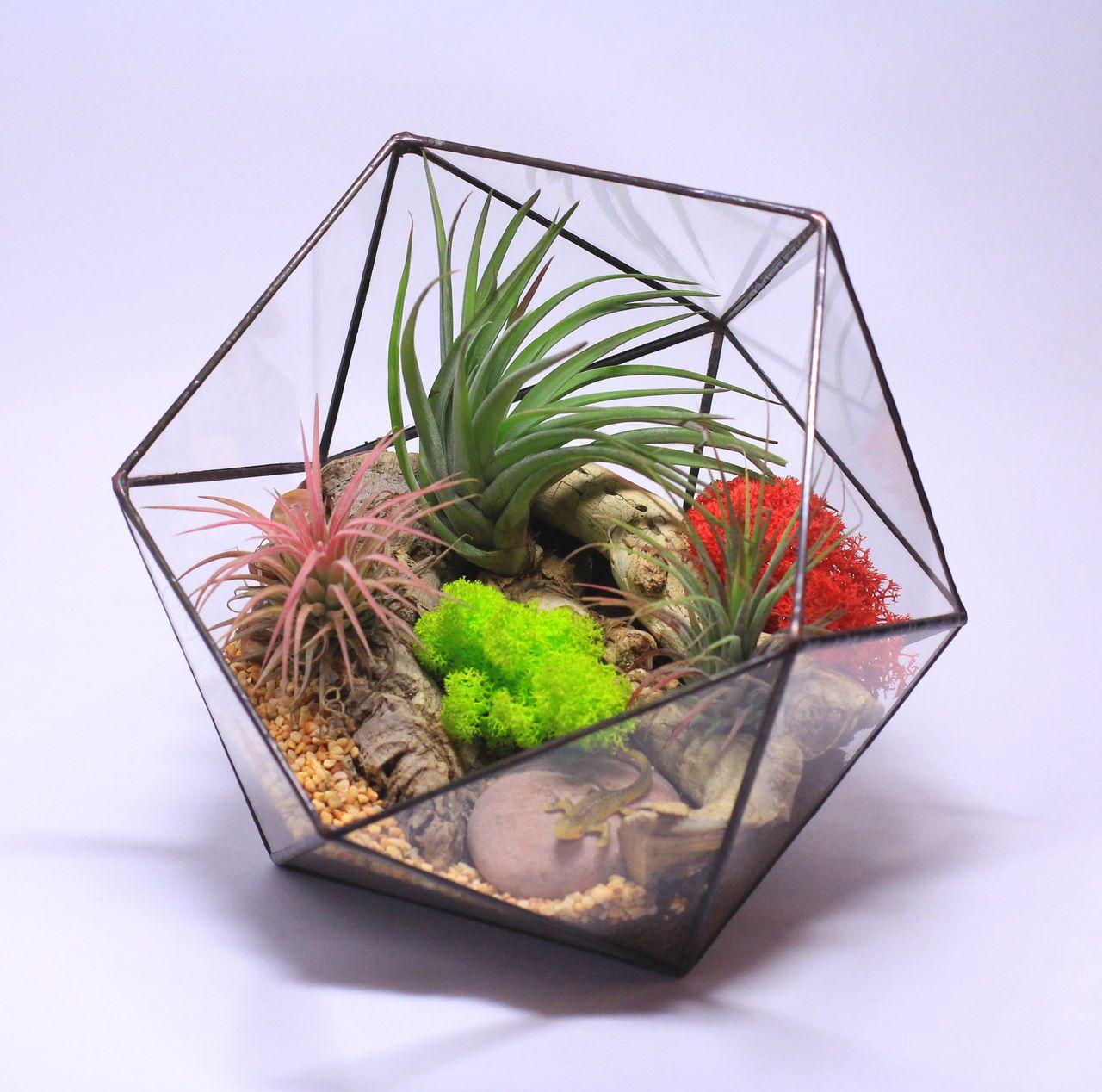 Как сделать флорариум своими руками - Handmade Idea 98
