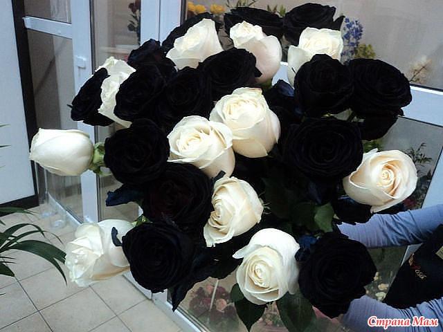 Черные розы белые розы