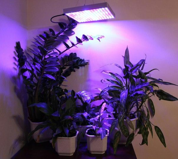Светодиодная фитолампа для растений своими руками