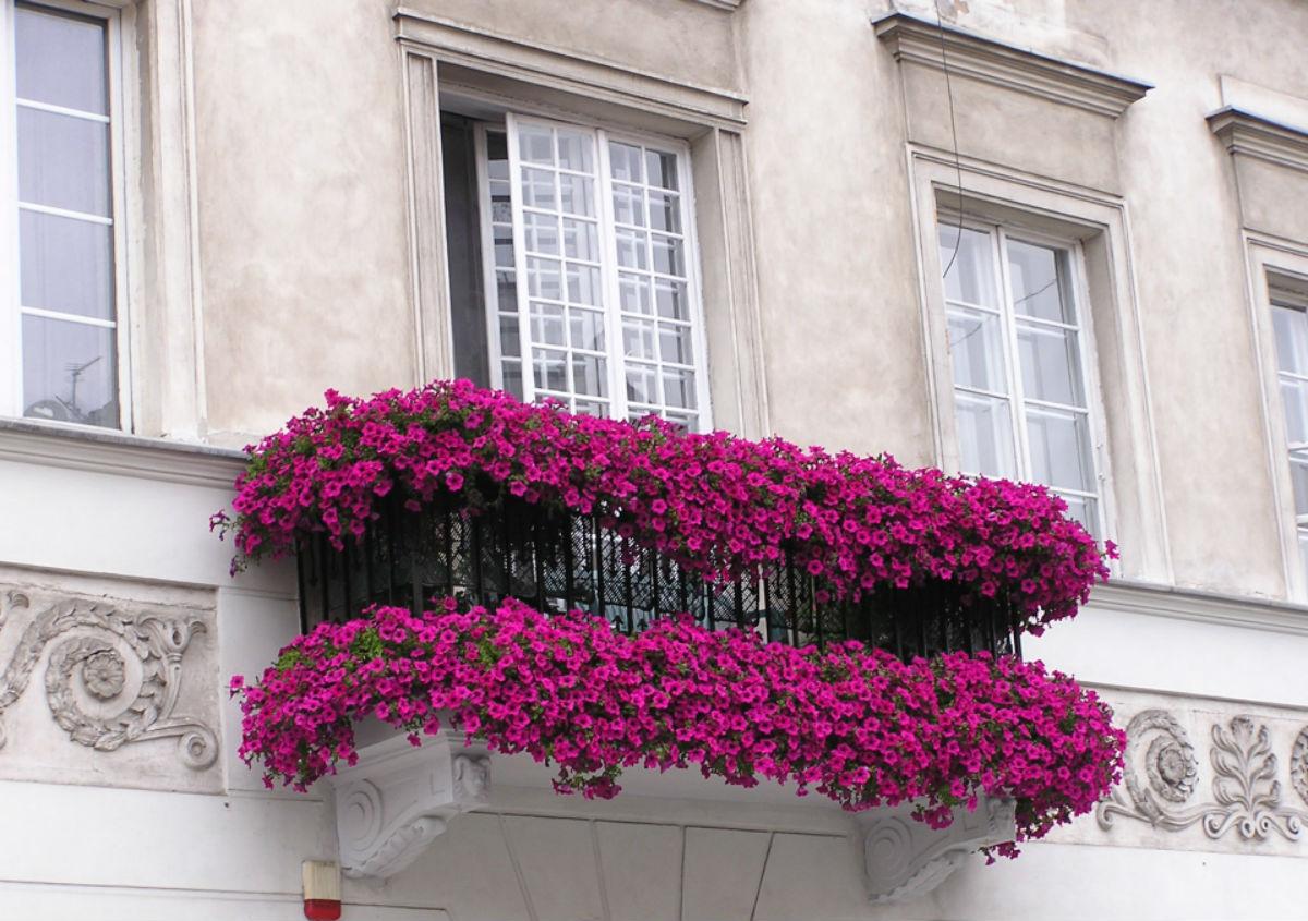 Фото и названия цветов для окон
